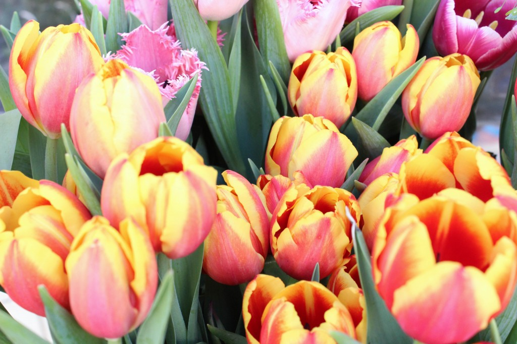 מעלה חיוך ביום חוייך. הפרחים של Shoshan's. צילום: רוית רוד